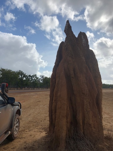 A termite mound across the the Bramwell Junction Roadhouse, Cape York Peninsula.